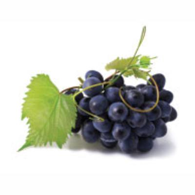 agrobras-uva-sweet-jubilee