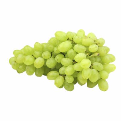 uva-sugraone-agrobras